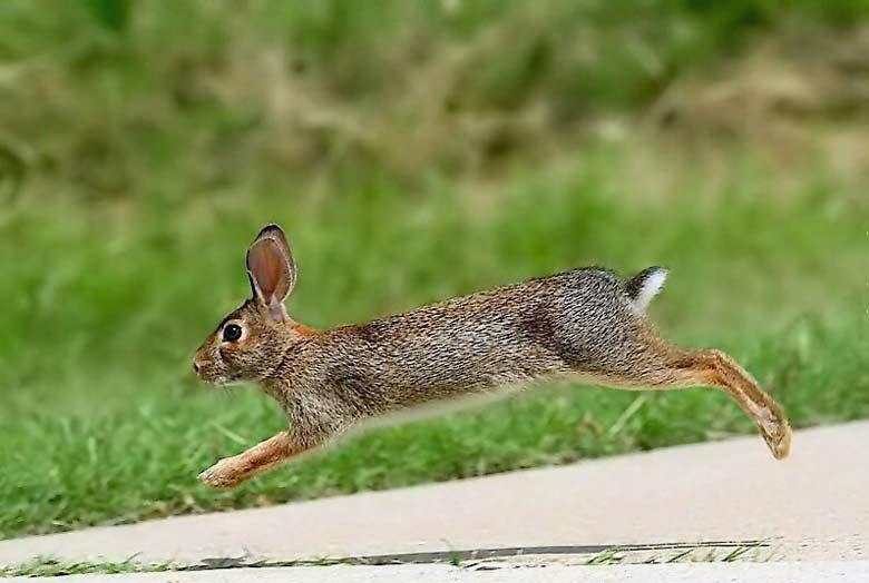 Ночная охота на зайца